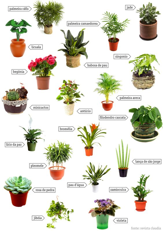 Tipos de plantas para jardim entenda antes arquitetura for Tipos de plantas para decorar interiores