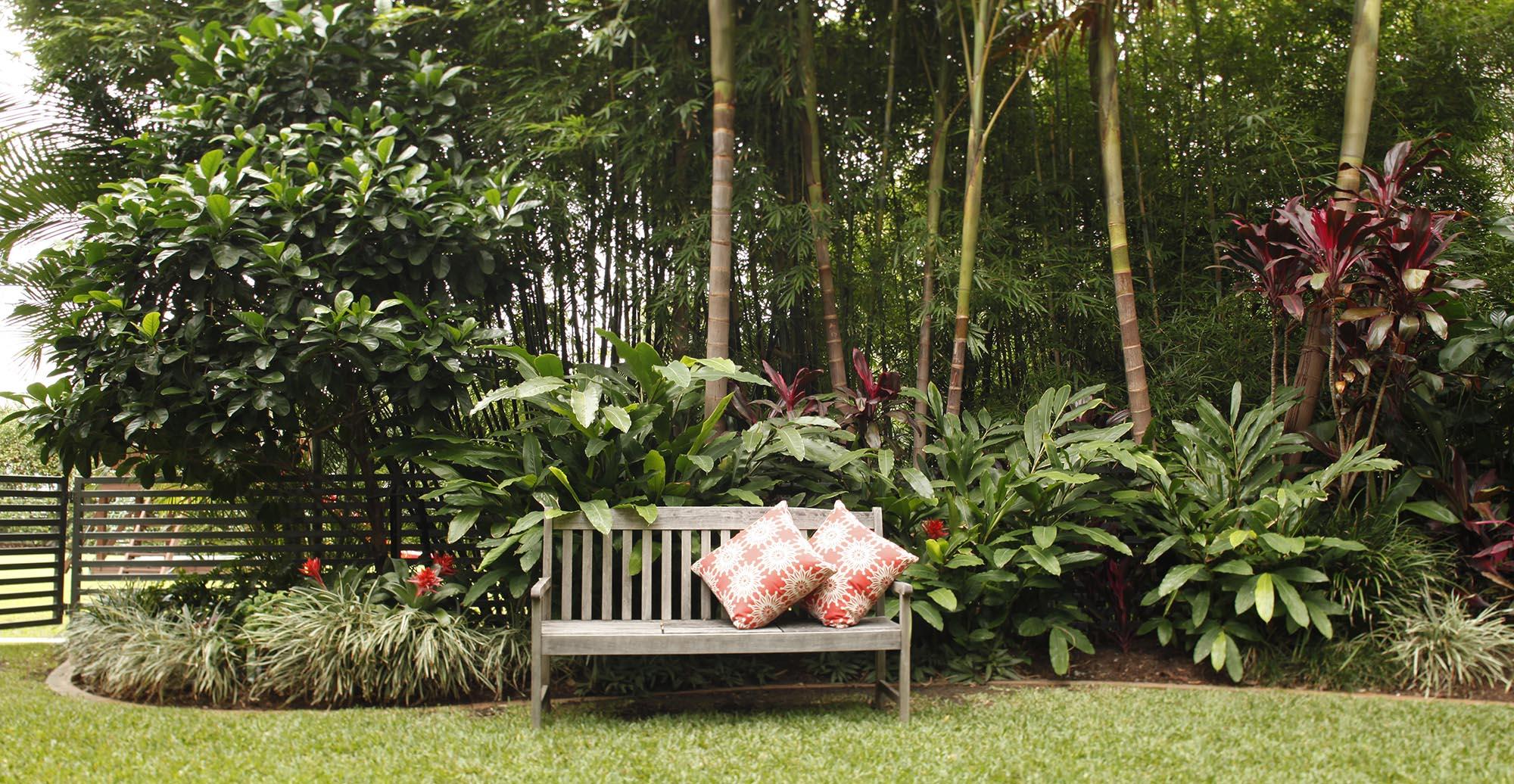 jardim tropical - entenda antes