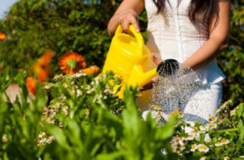 Descubra como cuidar do seu Jardim de uma forma fácil para sempre mantê-lo bonito. Entenda Antes!