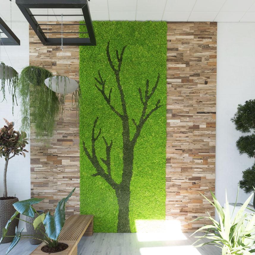 jardim vertical musgo - entenda antes