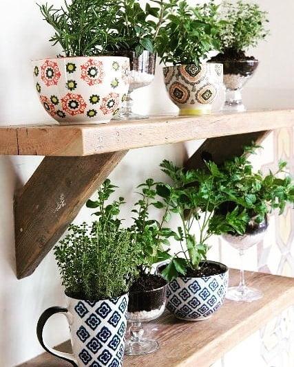plantas ornamentais ervas