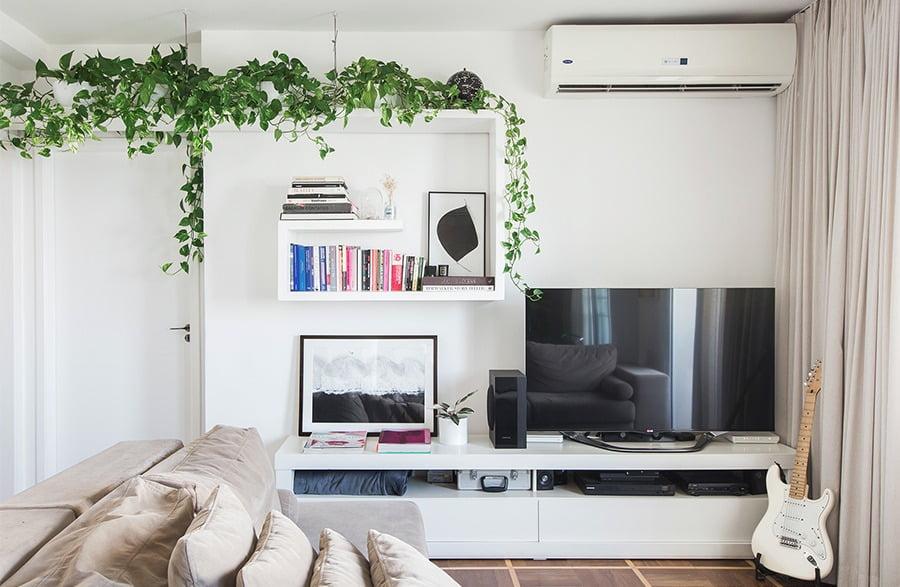 plantas ornamentais jiboia