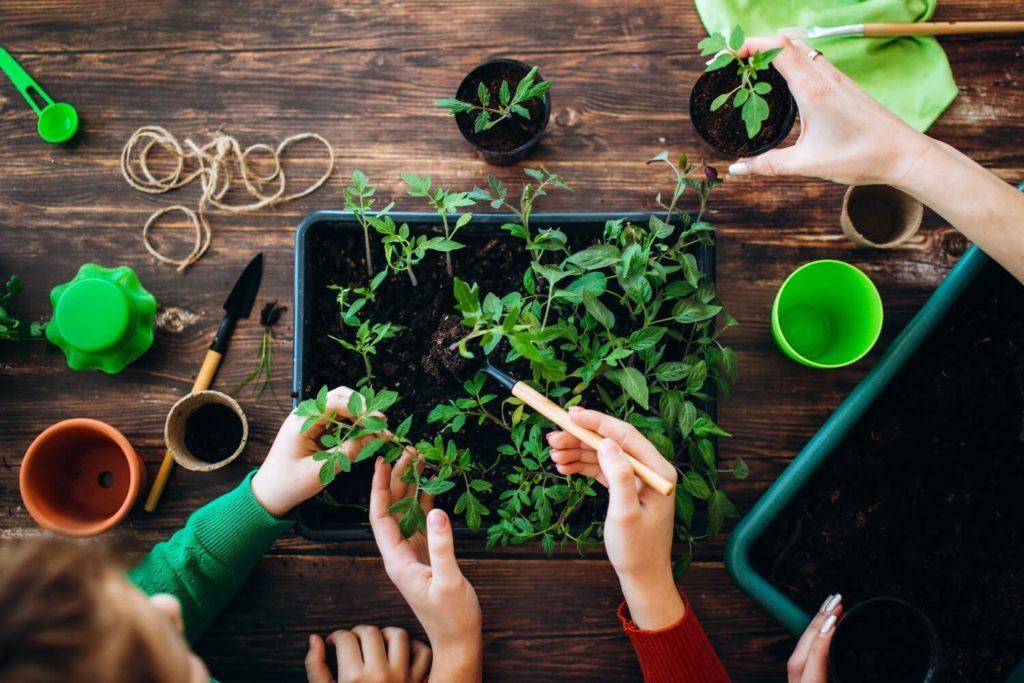 Qual tipo de terra devemos utilizar em uma horta?