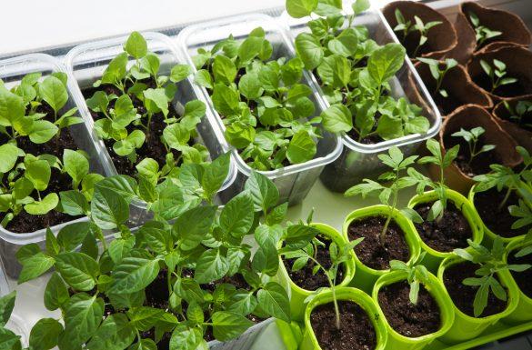 Está pensando em começar uma horta? A gente te ajuda!