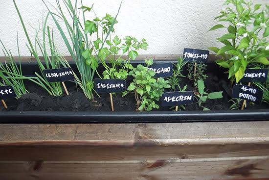 Com quais plantas devemos começar uma horta