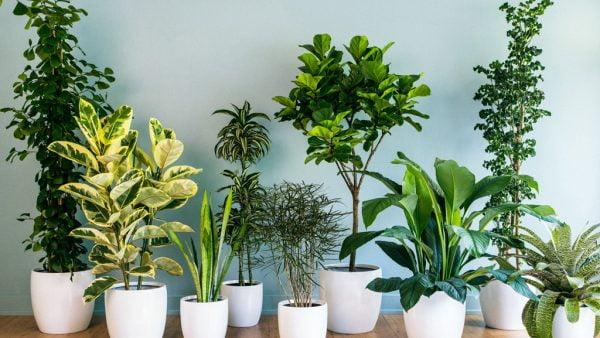Plantas ornamentais: tudo que você precisa saber
