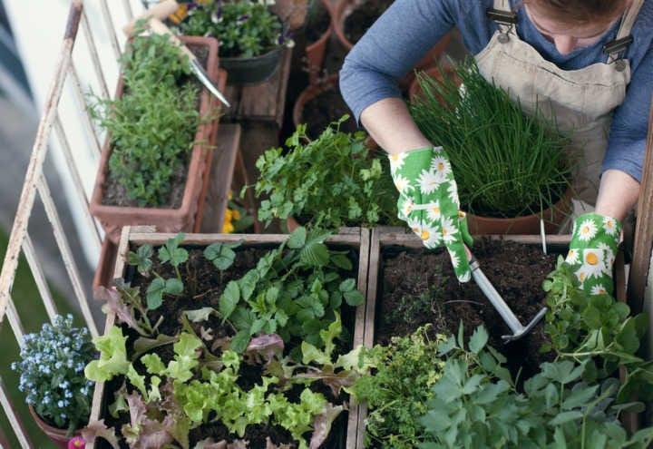 Quais os cuidados a serem tomados em uma horta?